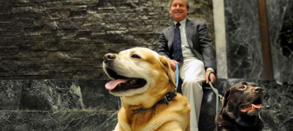 English labs Teddy, left, and Winston, right, relax with their owner, Assemblyman Steve Otis, during Animal Advocacy Day on Wednesday, June 3, 2015, at the Legislative Office Building in Albany, N.Y. (Cindy Schultz / Times Union)
